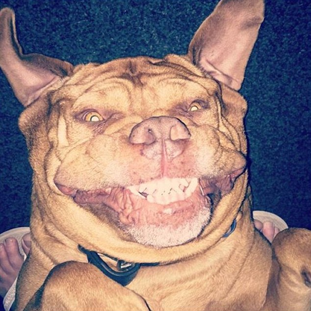2CAF35F700000578-3246227-This_dogue_de_Bordeaux_does_its_best_impression_of_a_bat_while_s-m-29_1443602410952